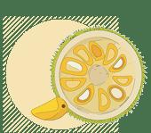 Jack Fruit Processing